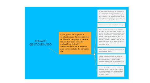 Mind Map: APARATO GENITOURINARIO