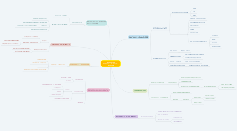Mind Map: MICROBIOMA INTESTINAL EN POLLOS Y GALLINAS