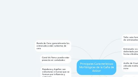 Mind Map: Principales Características Morfológicas de la Caña de Azúcar