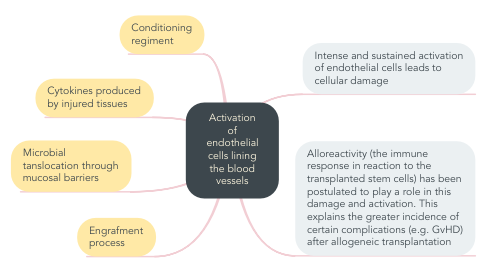 Mind Map: Activation of endothelial cells lining the blood vessels