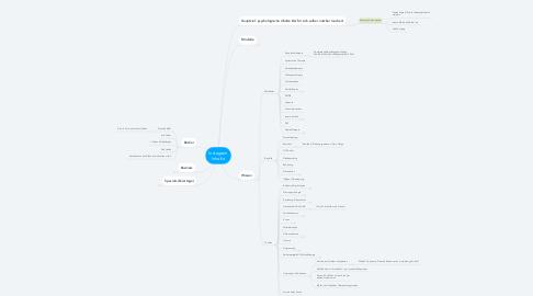 Mind Map: Instagram Inhalte