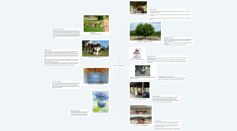 Mind Map: NEW LIFE FOUNDATION