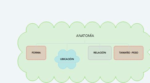 Mind Map: ANATOMÌA