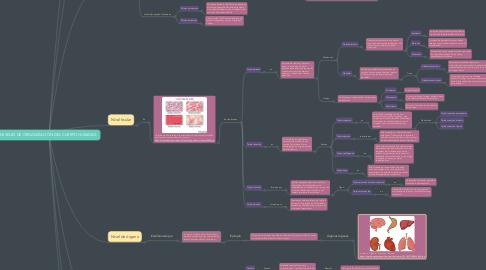 Mind Map: NIVELES DE ORGANIZACIÓN DEL CUERPO HUMANO.