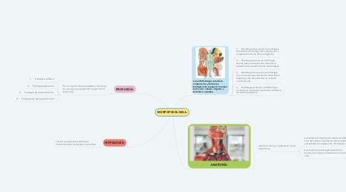 Mind Map: MORFOFISIOLOGIA.