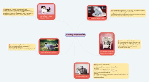 Mind Map: 5 สายพันธุ์เเมวยอดนิยมในไทย