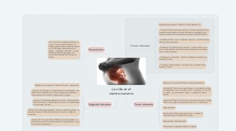 Mind Map: La vida en el vientre materno