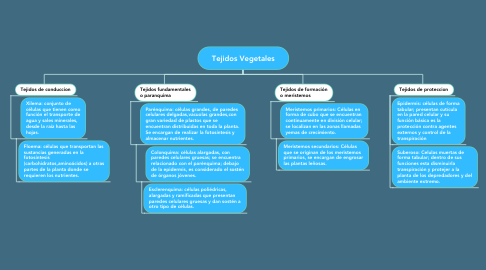 Mind Map: Tejidos Vegetales