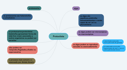 Mind Map: Protoctista