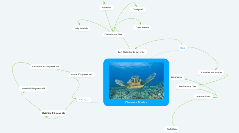 Mind Map: Chelonia Mydas