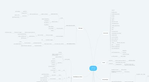Mind Map: ICTERÍCIA ADULTO