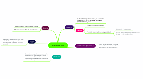 Mind Map: Sistema Renal
