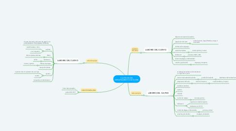Mind Map: CULTIVOS DEL DEPARTAMENTO DE SUCRE
