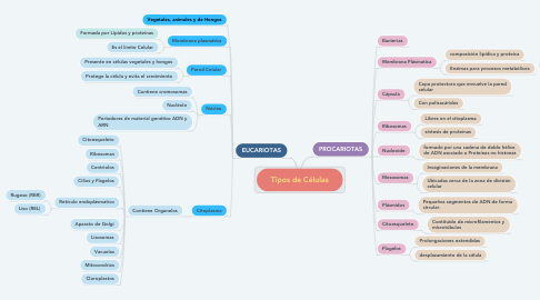 Mind Map: Tipos de Células