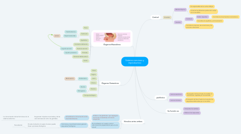 Mind Map: Sistema nervioso y reproductivo