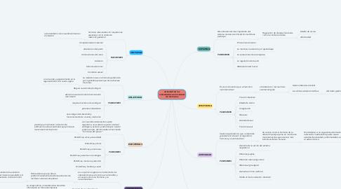 Mind Map: Actividad de los aminoácidos con la síntesis de hormonas