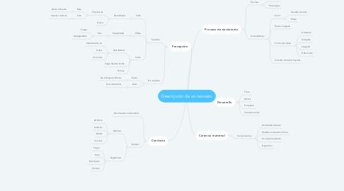 Mind Map: Descripción de un neonato