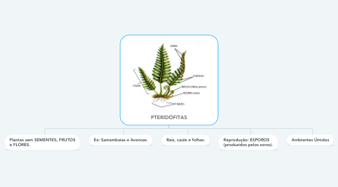 Mind Map: PTERIDÓFITAS