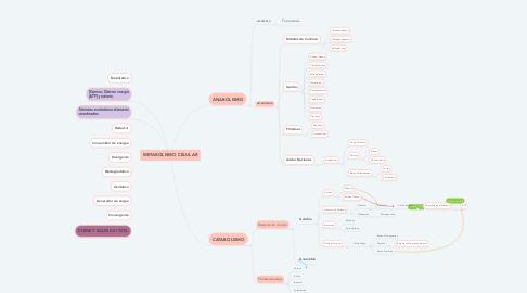Mind Map: METABOLISMO CELULAR