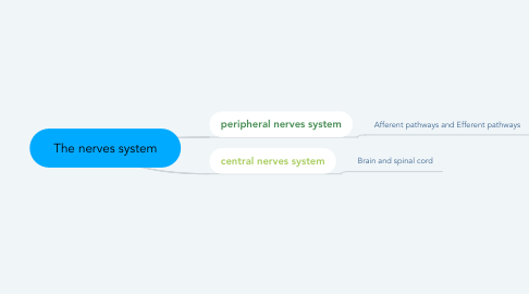 Mind Map: The nerves system