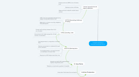 Mind Map: Transport activities of proximal convoluted tubule