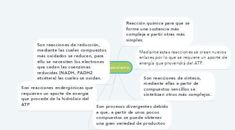 Mind Map: Anabolismo