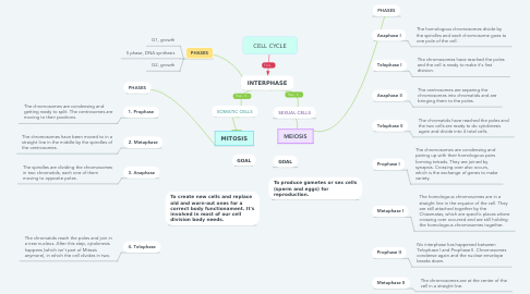 Mind Map: CELL CYCLE
