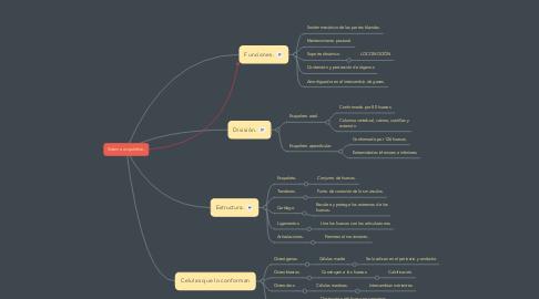 Mind Map: Sistema esquelético.