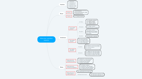 Mind Map: Músculos miembro superior