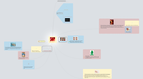 Mind Map: EL ABORTO