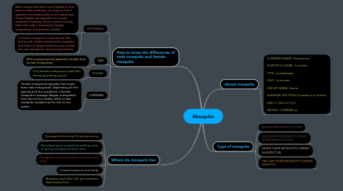 Mind Map: Mosquito