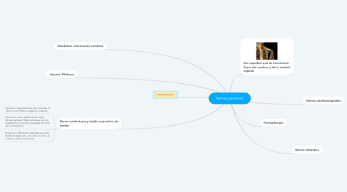 Mind Map: Nervio periférico