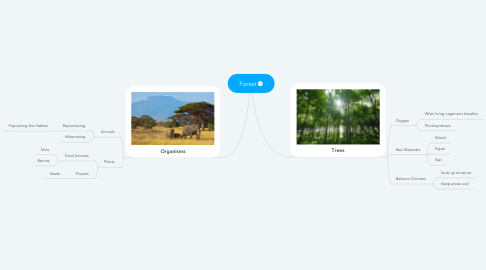 Mind Map: Forest
