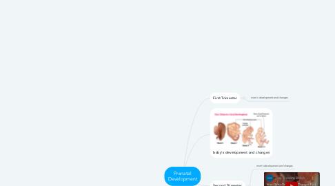 Mind Map: Prenatal Development