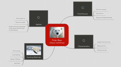 Mind Map: Polar Bear Ursus maritmus