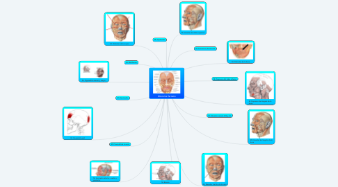 Mind Map: Músculos Faciales