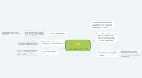 Mind Map: How does photosynthesis work?