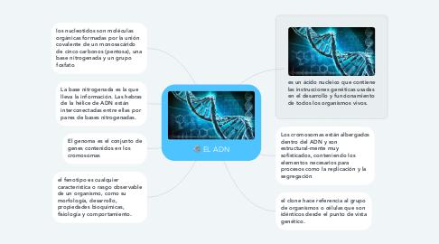 Mind Map: EL ADN