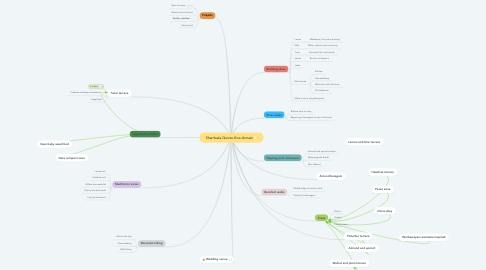 Mind Map: Shambala Quinta Kins domain