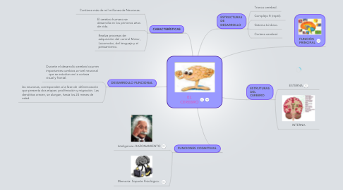 Mind Map: EL CEREBRO