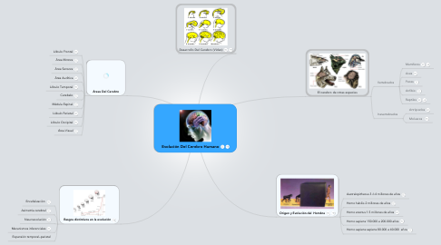 Mind Map: Evolución Del Cerebro Humano