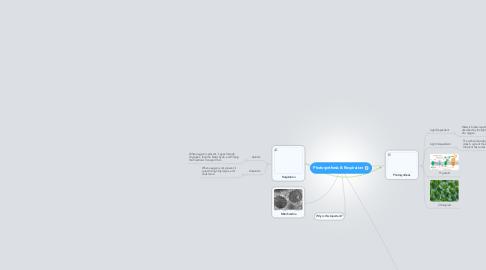 Mind Map: Photosynthesis & Respiration