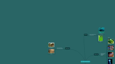Mind Map: LAS ERAS GEOLOGICAS