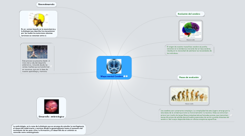 Mind Map: Mapa mental Cerebro