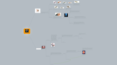 Mind Map: El Cerebro Humano