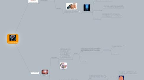 Mind Map: El Cerebro Humano