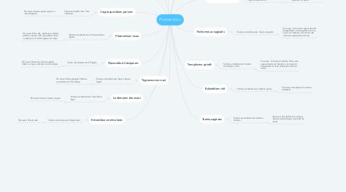 Mind Map: Protozoários