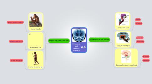 Mind Map: Evolucion del cerebro humano
