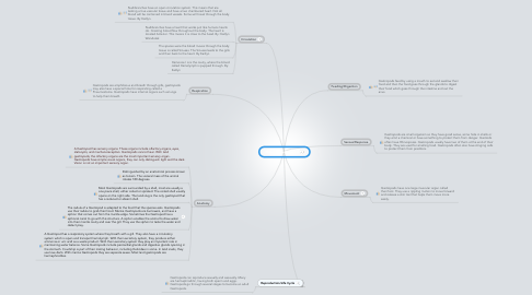Mind Map: Hour 4 Gastropod