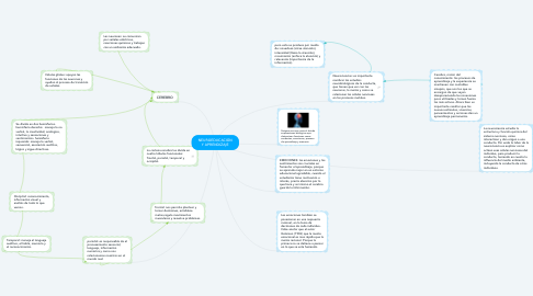 Mind Map: NEUROEDUCACIÓN Y APRENDIZAJE